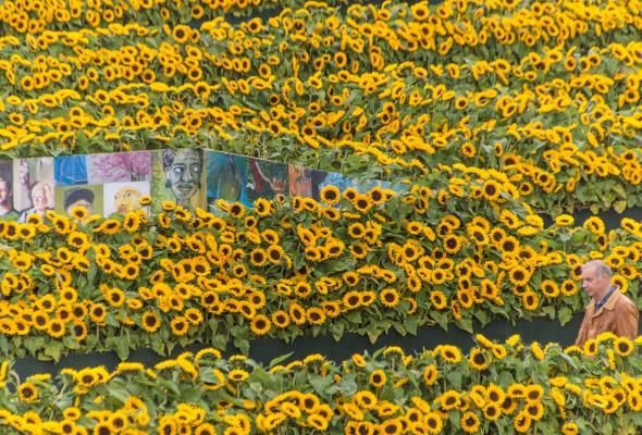 Flower Labyrinth at Van Gogh Museum